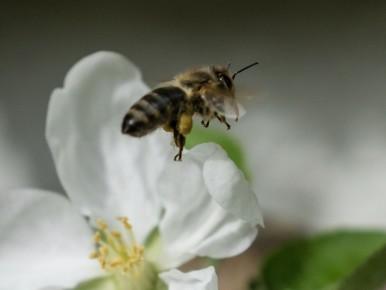Bienenfleissig (3 von 6)
