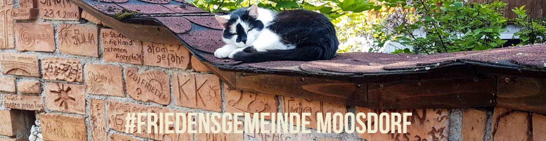 Moosdorf Live - auf die Menschen kommt es an
